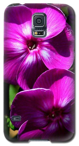 Vibrant Galaxy S5 Case