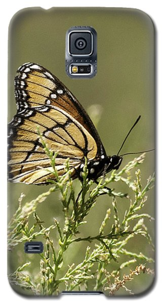 Galaxy S5 Case featuring the photograph Viceroy Butterfly by Betty Depee