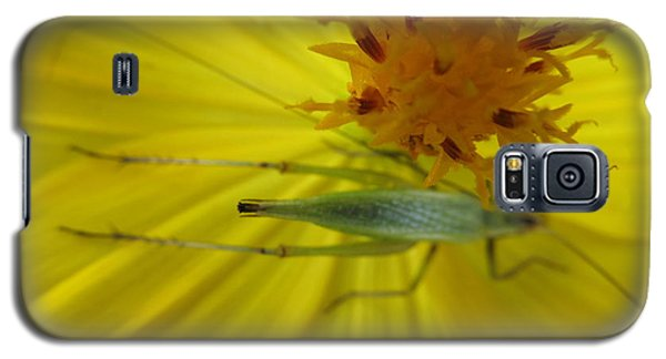 Galaxy S5 Case featuring the photograph Visitor by Tina M Wenger