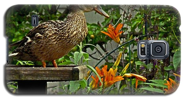 Galaxy S5 Case featuring the photograph Visitor To The Feeder by William Fields