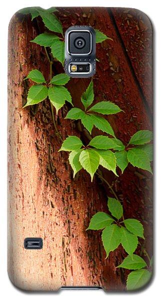 Vitis Galaxy S5 Case