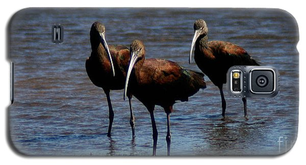 Galaxy S5 Case featuring the photograph Waiding Ibis by Mitch Shindelbower