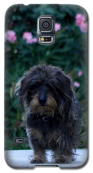 Galaxy S5 Case featuring the photograph Waiting by Lainie Wrightson