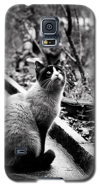 Galaxy S5 Case featuring the photograph Waiting by Laura Melis