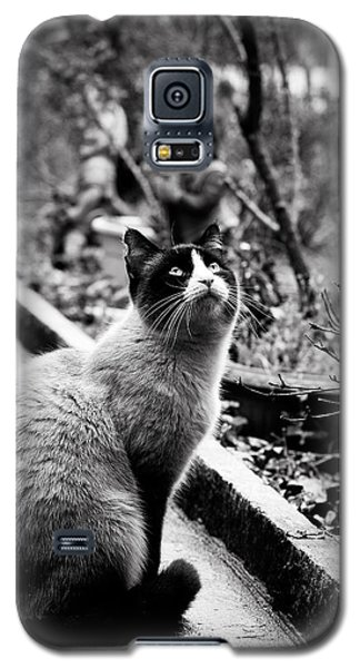 Waiting Galaxy S5 Case by Laura Melis