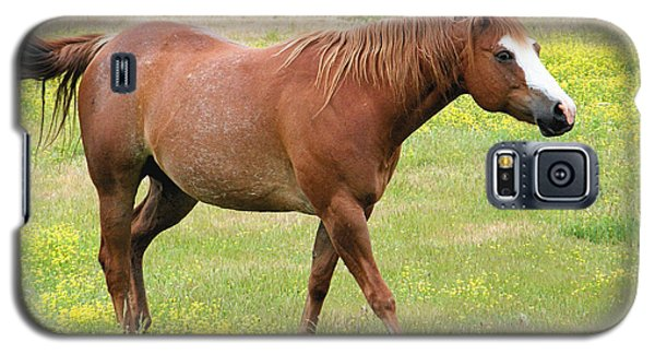 Galaxy S5 Case featuring the photograph Walking Horse by Wendy McKennon