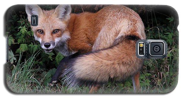 Wary Fox Galaxy S5 Case by Doris Potter