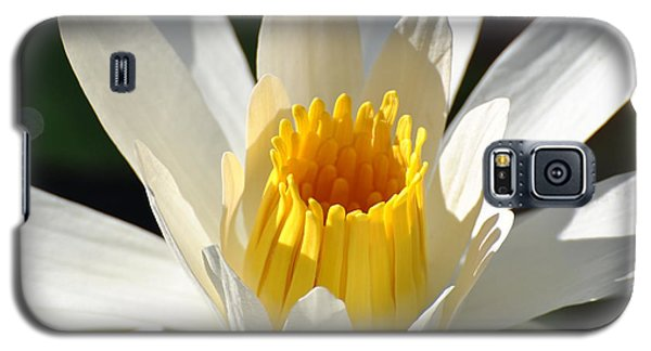 Galaxy S5 Case featuring the photograph Water Lilly by Jodi Terracina
