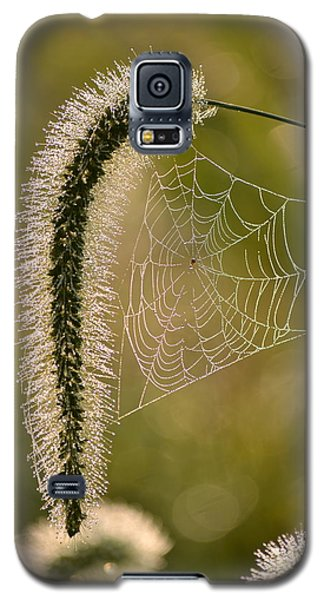 Webbed Tail Galaxy S5 Case by JD Grimes