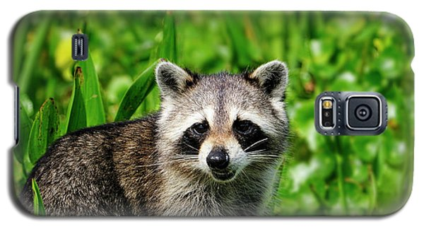 Wetlands Racoon Bandit Galaxy S5 Case