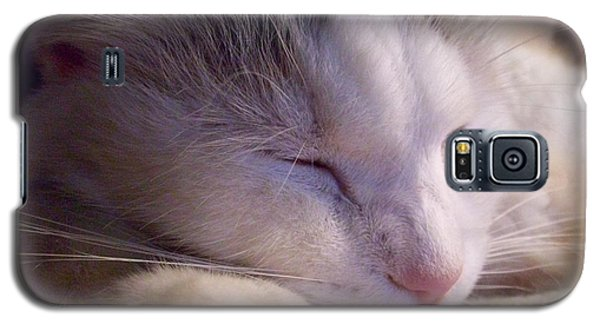 Galaxy S5 Case featuring the photograph What Is A Cat by Ginny Schmidt
