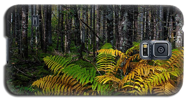 Where The Ferns Grow Galaxy S5 Case