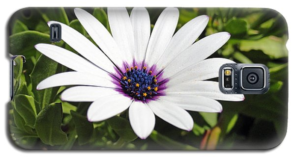 White African Daisy Galaxy S5 Case