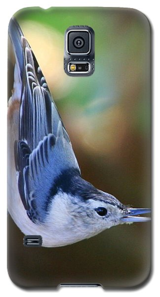 Galaxy S5 Case featuring the photograph White-breasted Nuthatch by Laurel Talabere
