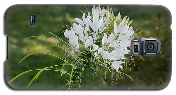 White Cleome Galaxy S5 Case by Michael Bessler