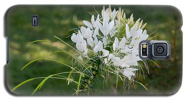 White Cleome Galaxy S5 Case