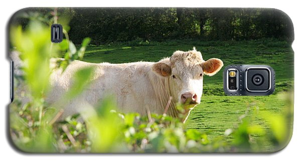 White Cow Galaxy S5 Case