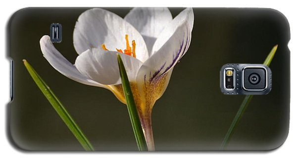White Crocus Galaxy S5 Case