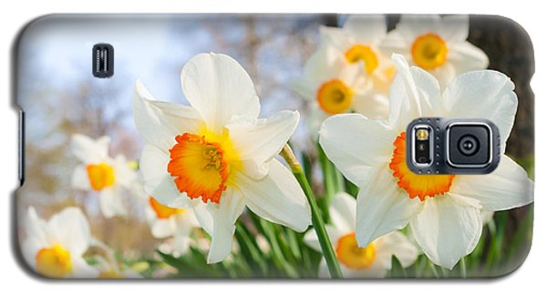 White Daffodils Galaxy S5 Case by Hans Engbers