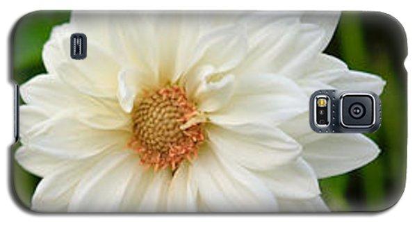 Galaxy S5 Case featuring the photograph White Dahlia by Ann Murphy