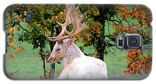 Galaxy S5 Case featuring the photograph White Deer by Wendy McKennon