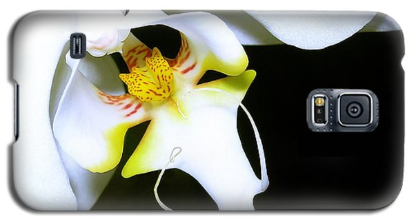 Galaxy S5 Case featuring the photograph White Elegance by Judi Bagwell