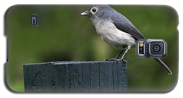 White-eyed Slaty Flycatcher Galaxy S5 Case by Tony Beck