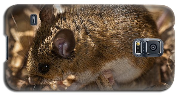 White-footed Mouse Galaxy S5 Case by  Onyonet Photo Studios