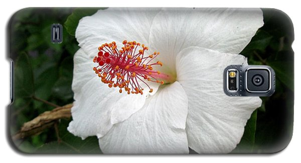 Galaxy S5 Case featuring the photograph White Hibiscus by Carol Sweetwood