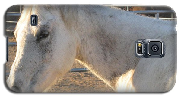 Galaxy S5 Case featuring the photograph White Horse by Sue Halstenberg