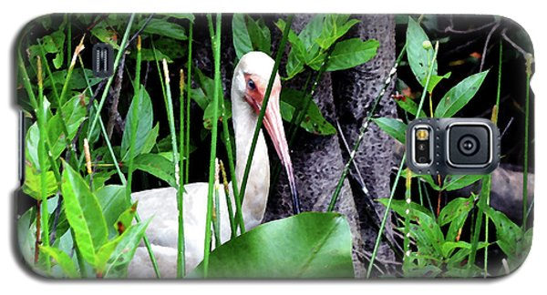 Galaxy S5 Case featuring the photograph White Ibis At The Everglades by Pravine Chester