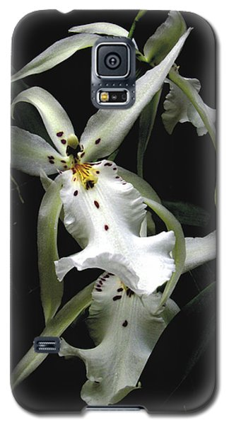 White Orchid Galaxy S5 Case