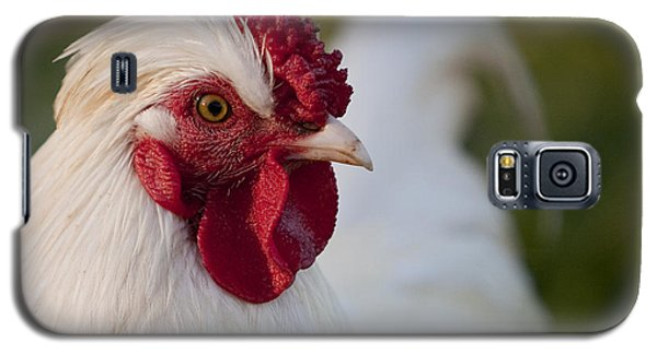 White Rooster Galaxy S5 Case by Michelle Wrighton