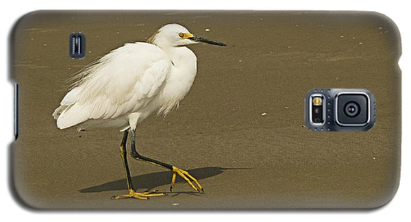 White Seabird Walking Galaxy S5 Case