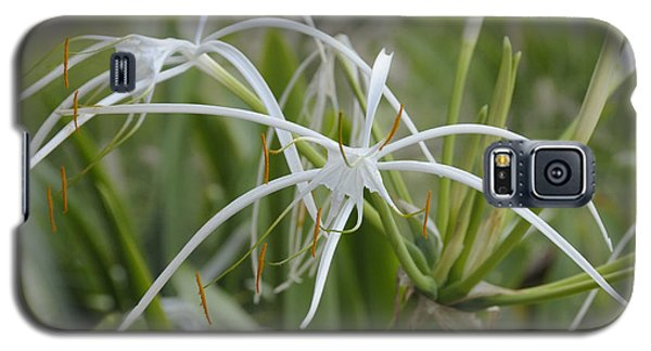 White Spider Orchid Galaxy S5 Case