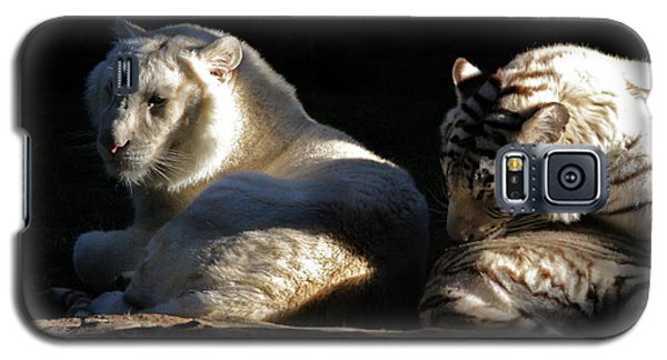 White Tiger And Lion Galaxy S5 Case