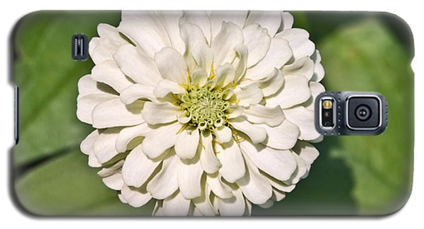Galaxy S5 Case featuring the photograph White Zinnia And Green Leaves by Susan Leggett