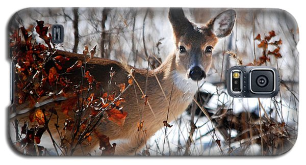 Whitetail Deer In Snow Galaxy S5 Case by Nava Thompson