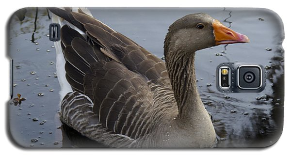 Galaxy S5 Case featuring the photograph Wild Greylag Goose by Lynn Palmer