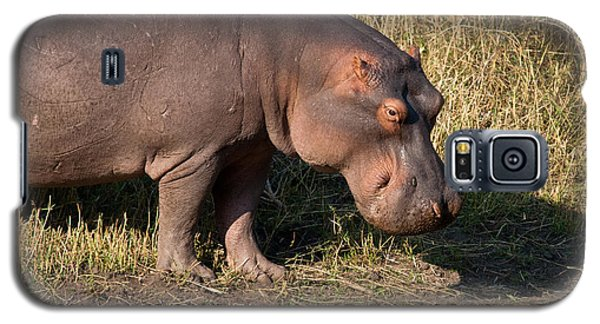 Galaxy S5 Case featuring the photograph Wild Hippopotamus by Karen Lee Ensley