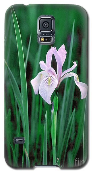 Galaxy S5 Case featuring the photograph Wild Iris by Doug Herr