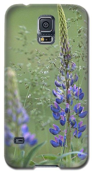 Wild Lupine Flower Galaxy S5 Case