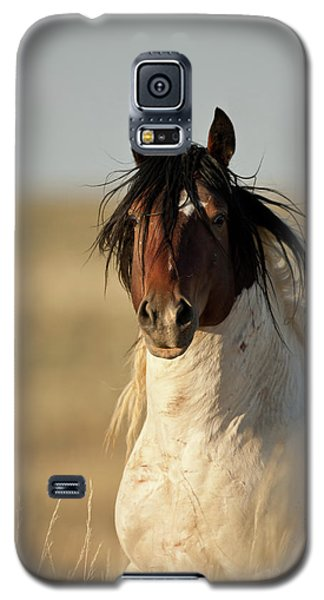 Wild Mustang Band Stallion Galaxy S5 Case