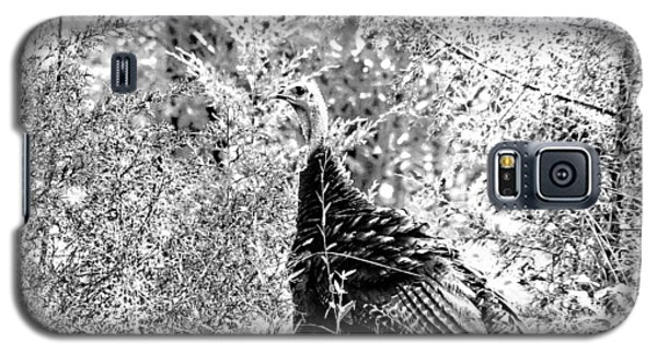 Galaxy S5 Case featuring the photograph Wild Turkey In Black And White by Maciek Froncisz