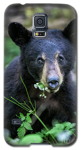 Wildflower Bear Galaxy S5 Case