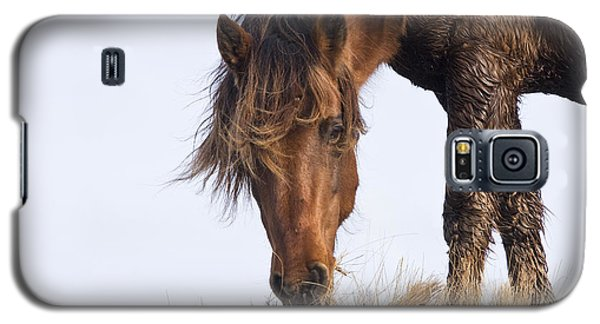 Wildhorse On The High Dunes Galaxy S5 Case by Bob Decker
