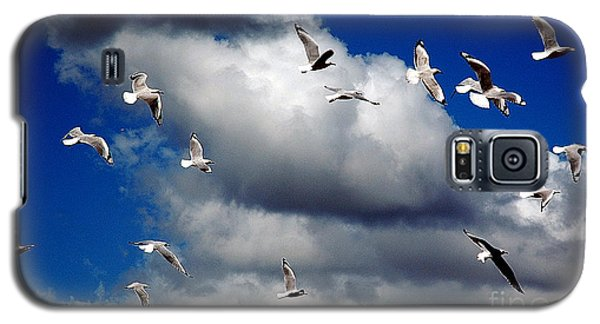 Galaxy S5 Case featuring the photograph Wind Sailing Seagulls by Vicki Ferrari