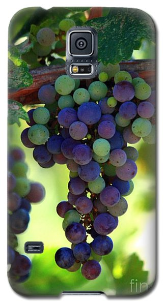 Wine To Be Galaxy S5 Case