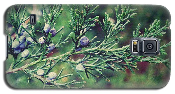 Galaxy S5 Case featuring the photograph Winter Berries by Robin Dickinson