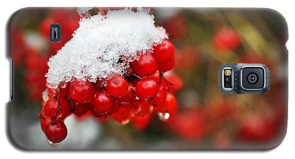 Winter Berries Galaxy S5 Case